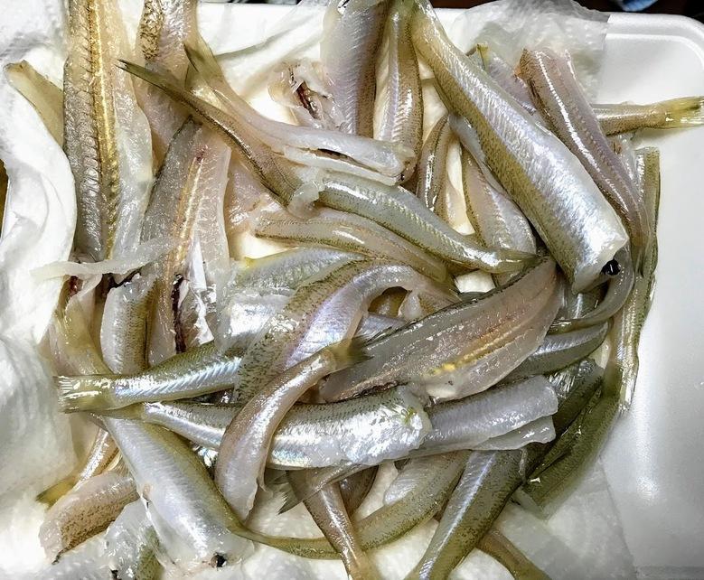 シロギス 釣り ちょい投げ 食べ方