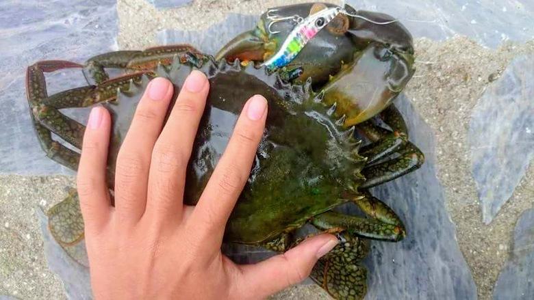 メタルマル 怪魚 ノコギリガザミ マングローブ 釣り 沖縄 石垣