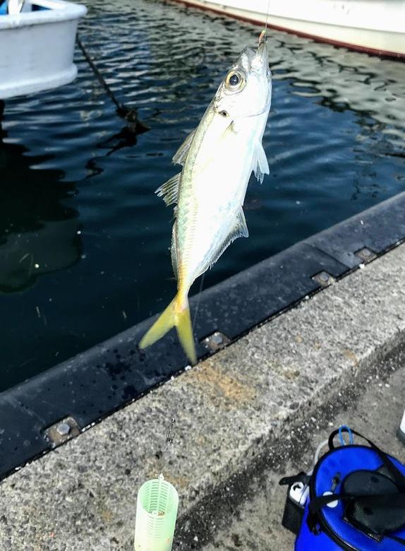 アジ アジング 釣り サビキ かご釣り