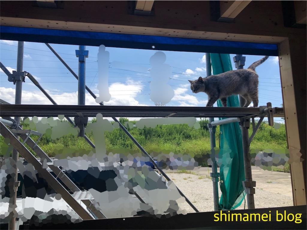 f:id:shimameiblog:20181208065753j:image