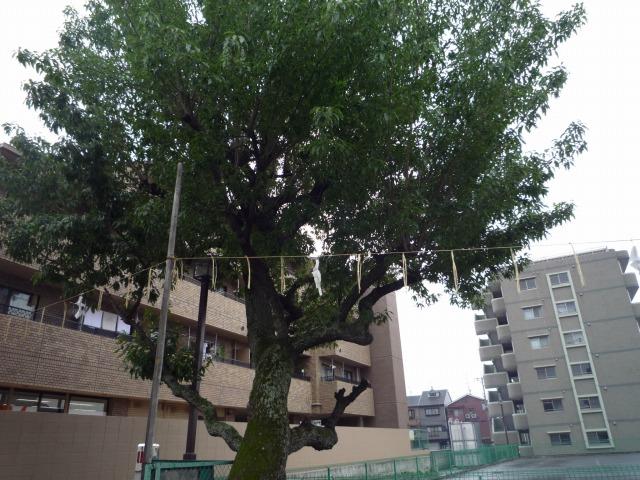 f:id:shimamukwansei:20110710112459j:image:w360