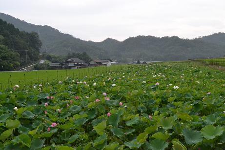 f:id:shimamukwansei:20110725143916j:image