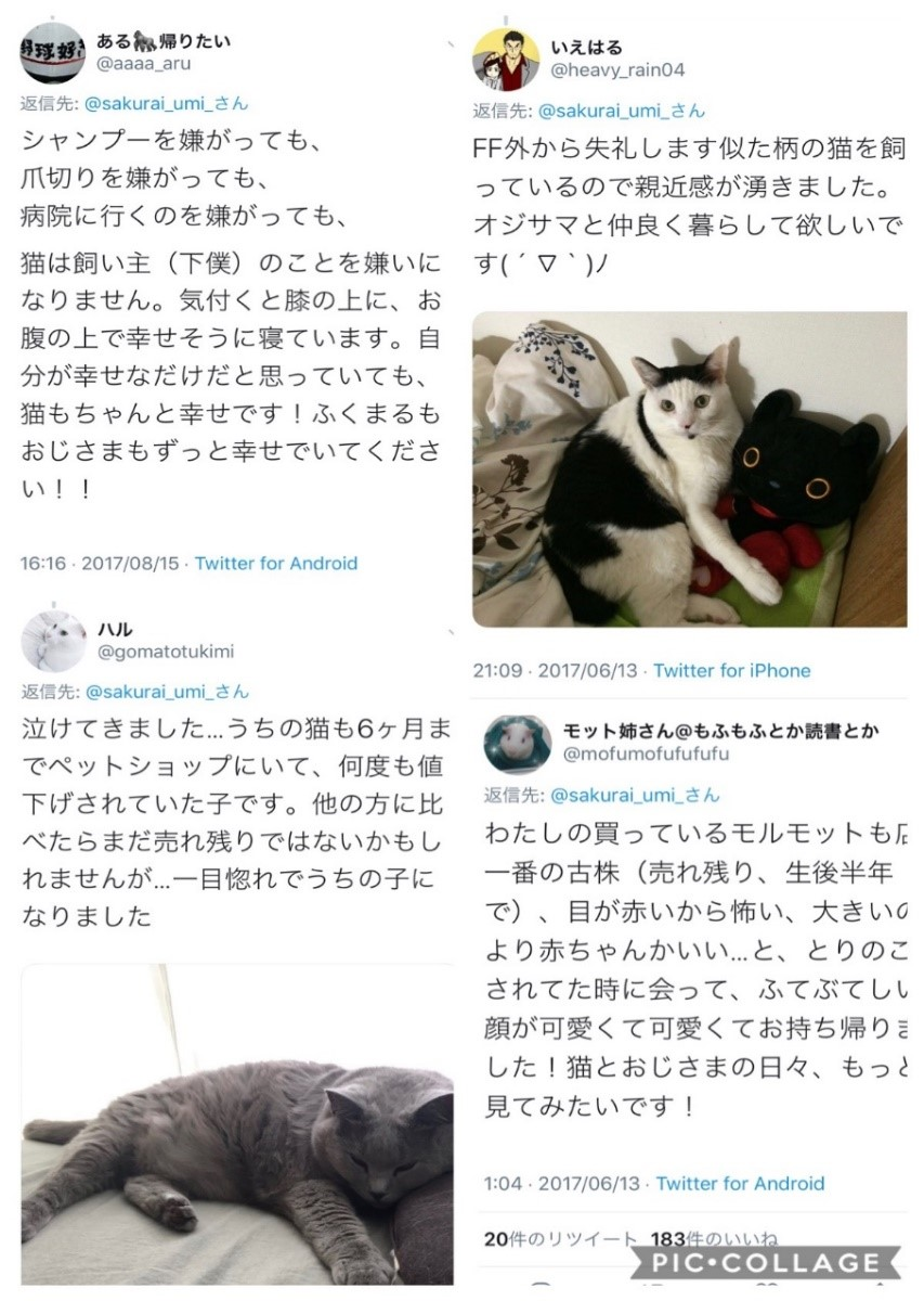 f:id:shimamukwansei:20200112010236j:plain