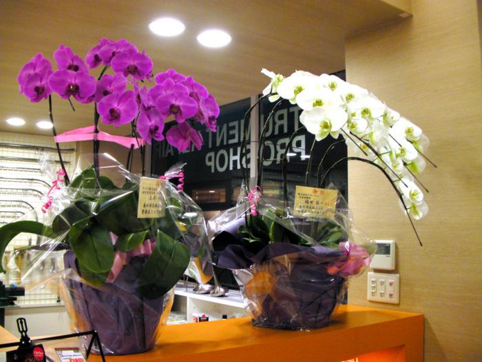 f:id:shimamura-music:20100514152448j:image