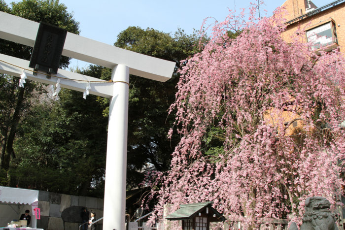f:id:shimamura-music:20120406162647j:image