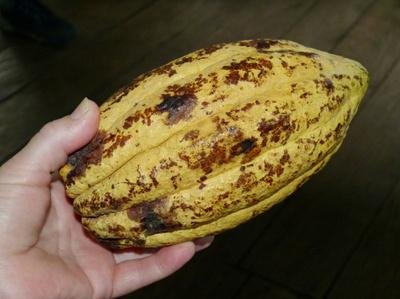 cocoa-bean-280110_1280.jpg