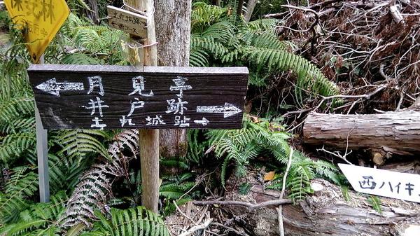 f:id:shimanchu5:20191221200540j:plain