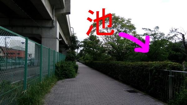 f:id:shimanchu5:20200930202335j:plain