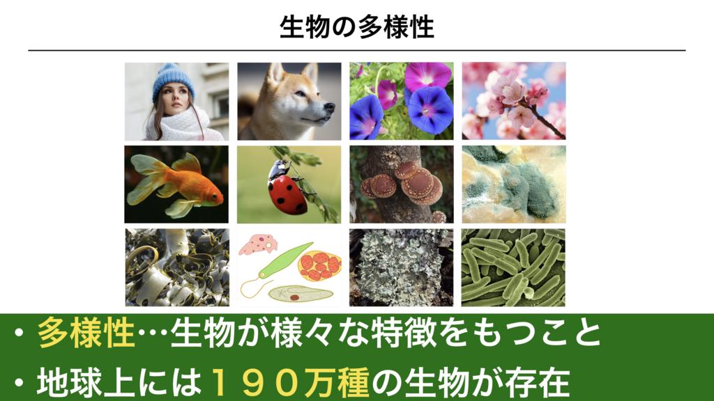 f:id:shimasensei:20180225073800j:plain