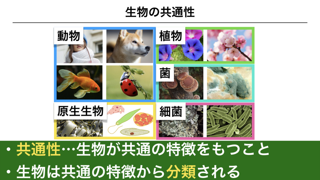 f:id:shimasensei:20180225073900j:plain