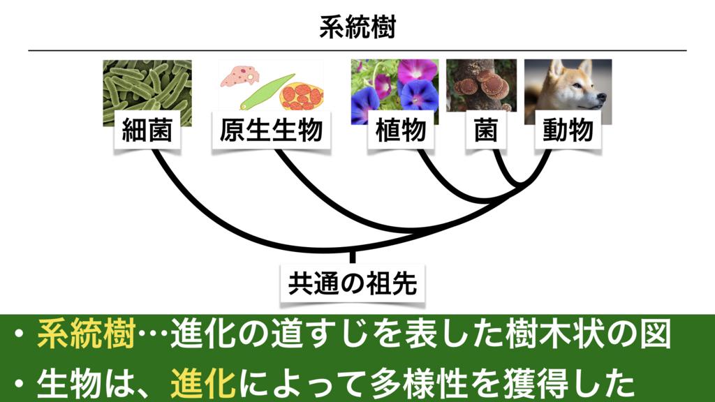 f:id:shimasensei:20180225073918j:plain