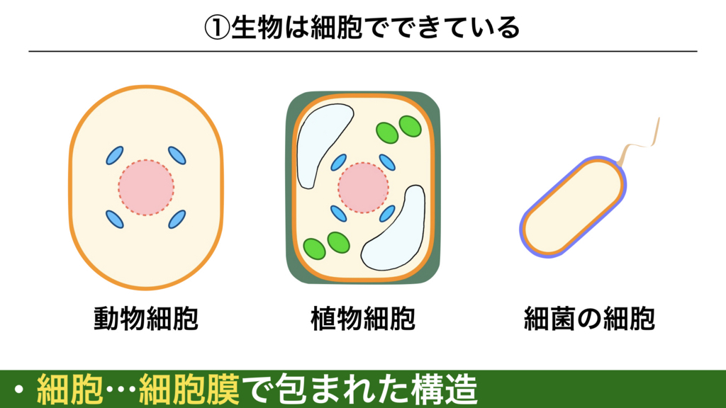 f:id:shimasensei:20180225073956j:plain
