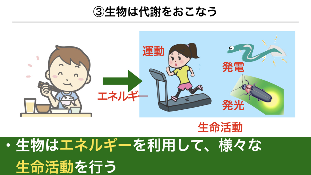 f:id:shimasensei:20180225074026j:plain