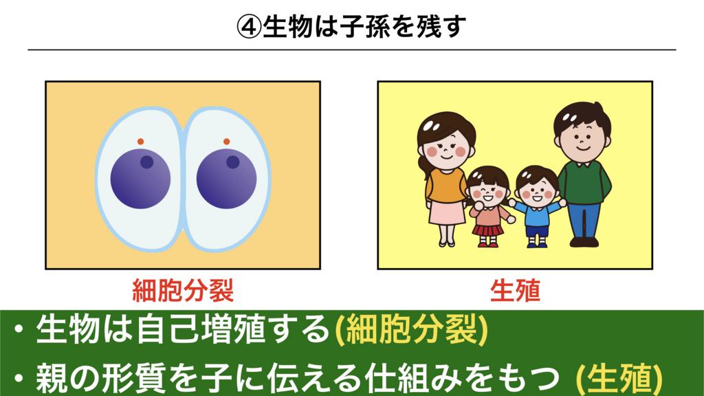 f:id:shimasensei:20180225074041j:plain