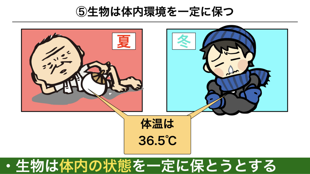 f:id:shimasensei:20180225074055j:plain