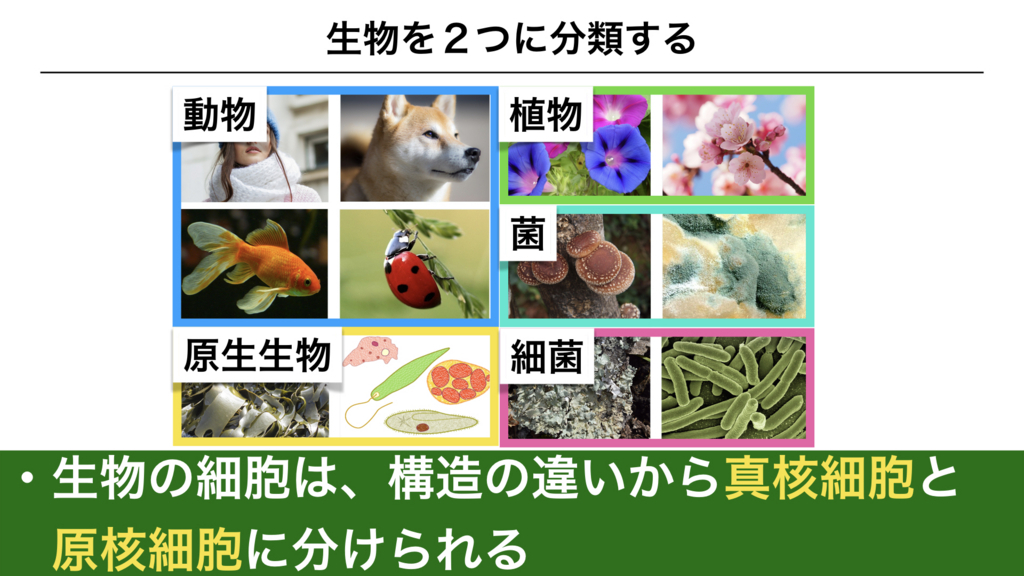 f:id:shimasensei:20180225135714j:plain