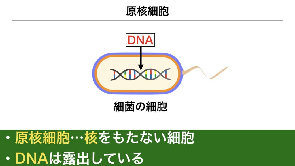 f:id:shimasensei:20180225135750j:plain