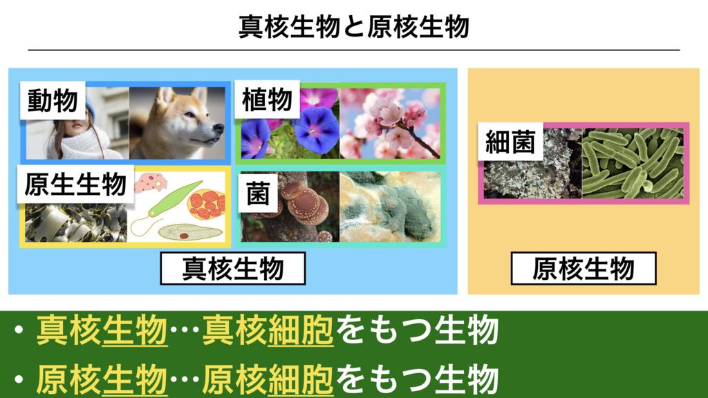 f:id:shimasensei:20180225135807j:plain