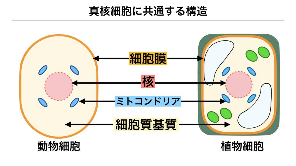 f:id:shimasensei:20180225135852j:plain