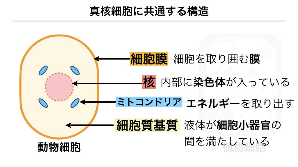 f:id:shimasensei:20180225135907j:plain