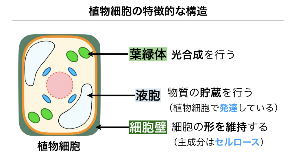 f:id:shimasensei:20180225135924j:plain