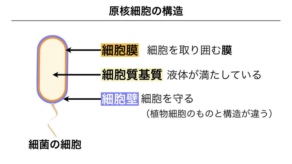 f:id:shimasensei:20180225135940j:plain