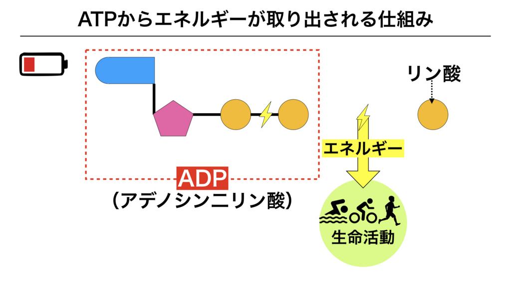f:id:shimasensei:20180225161320j:plain