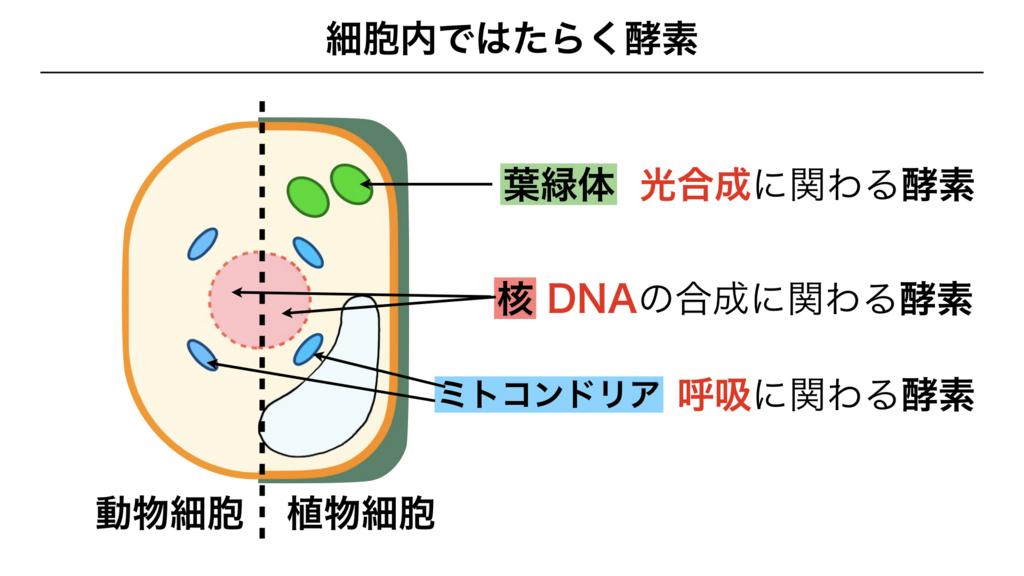 f:id:shimasensei:20180225194016j:plain