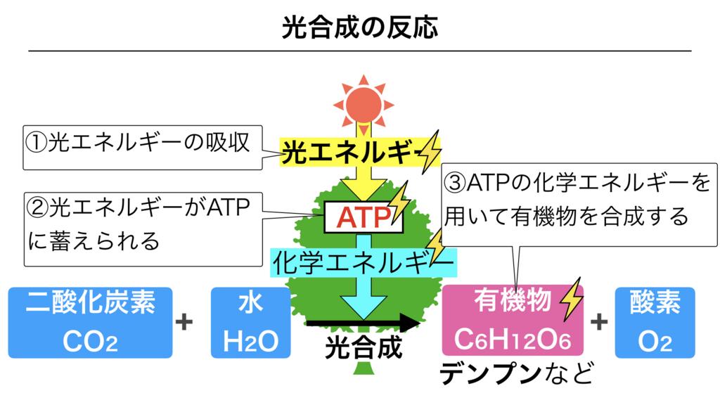 f:id:shimasensei:20180226171008j:plain