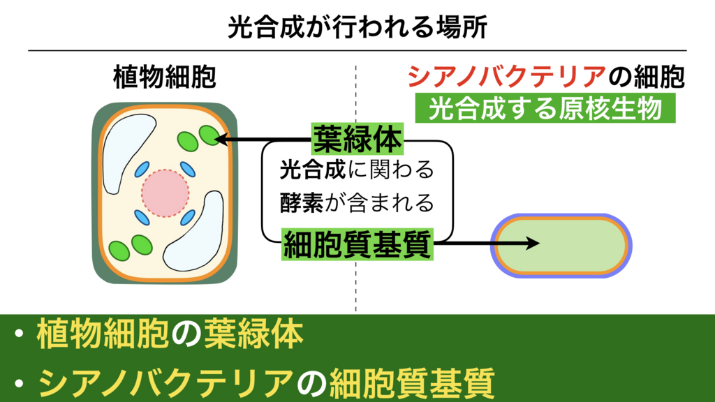 f:id:shimasensei:20180226171028j:plain