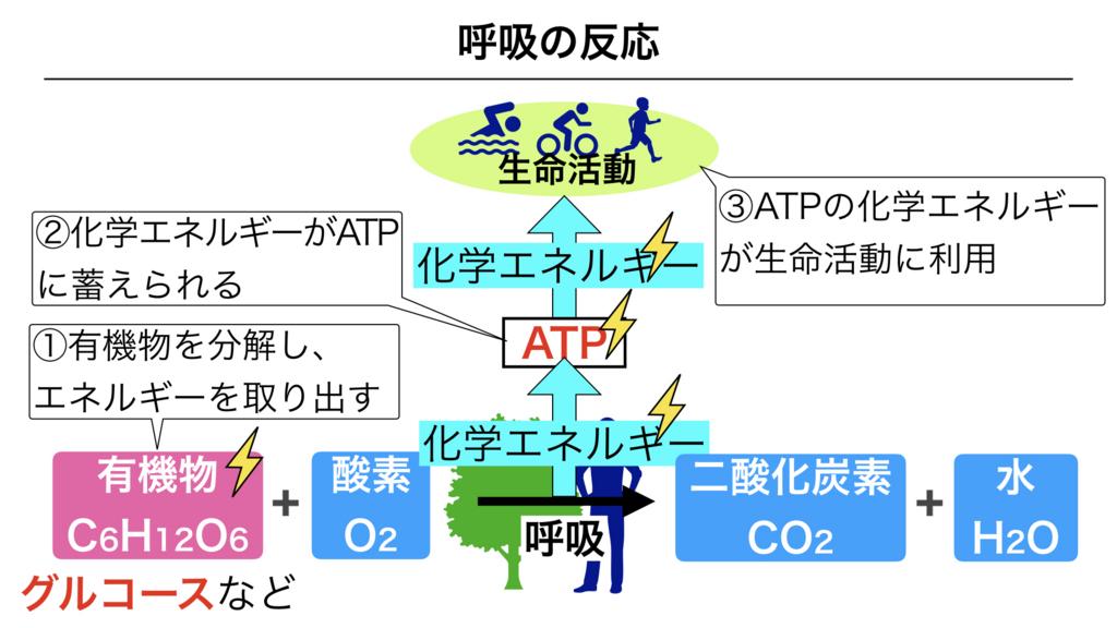 f:id:shimasensei:20180226203229j:plain
