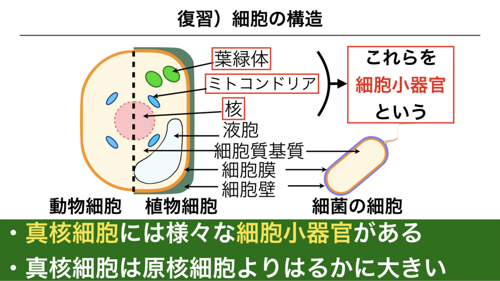 f:id:shimasensei:20180227173505j:plain