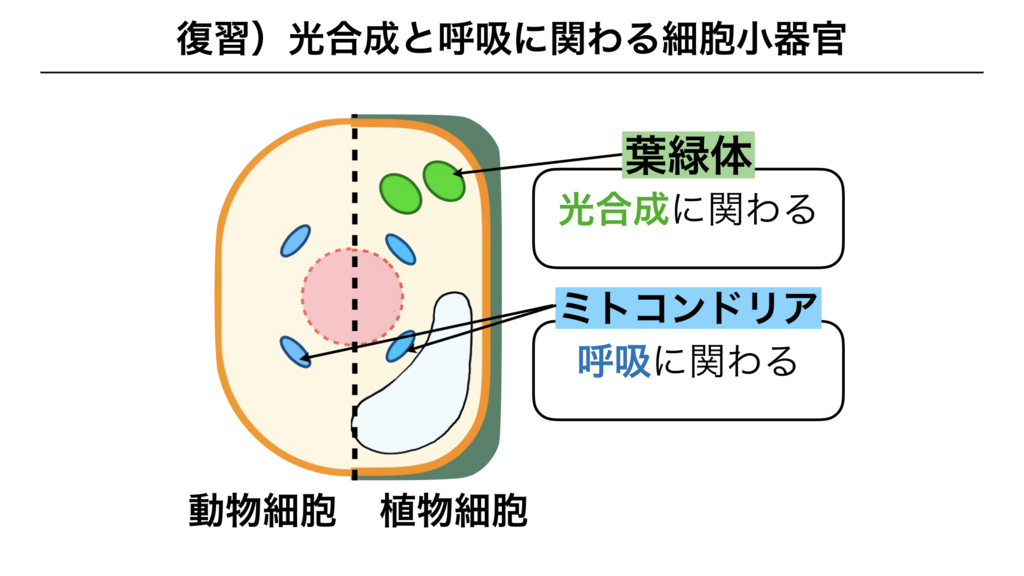 f:id:shimasensei:20180227173635j:plain