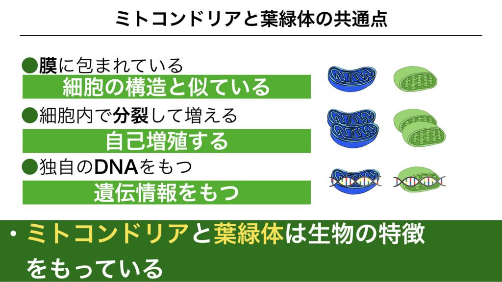 f:id:shimasensei:20180227173653j:plain