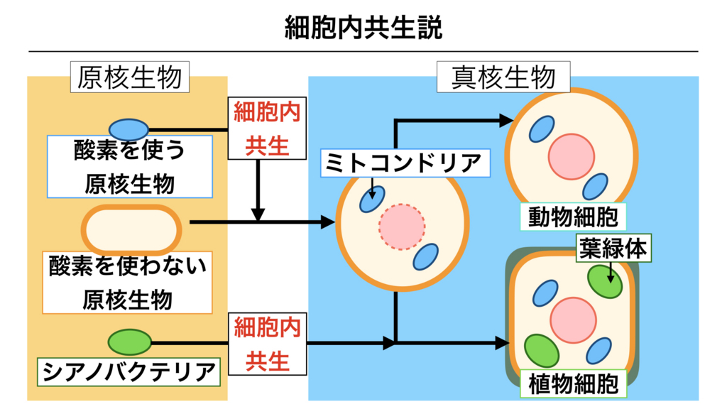f:id:shimasensei:20180227173722j:plain