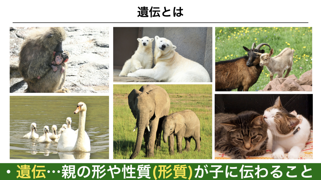 f:id:shimasensei:20180228184023j:plain