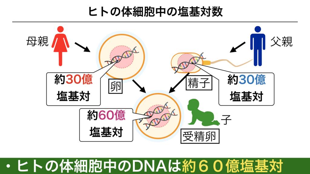 f:id:shimasensei:20180301173155j:plain