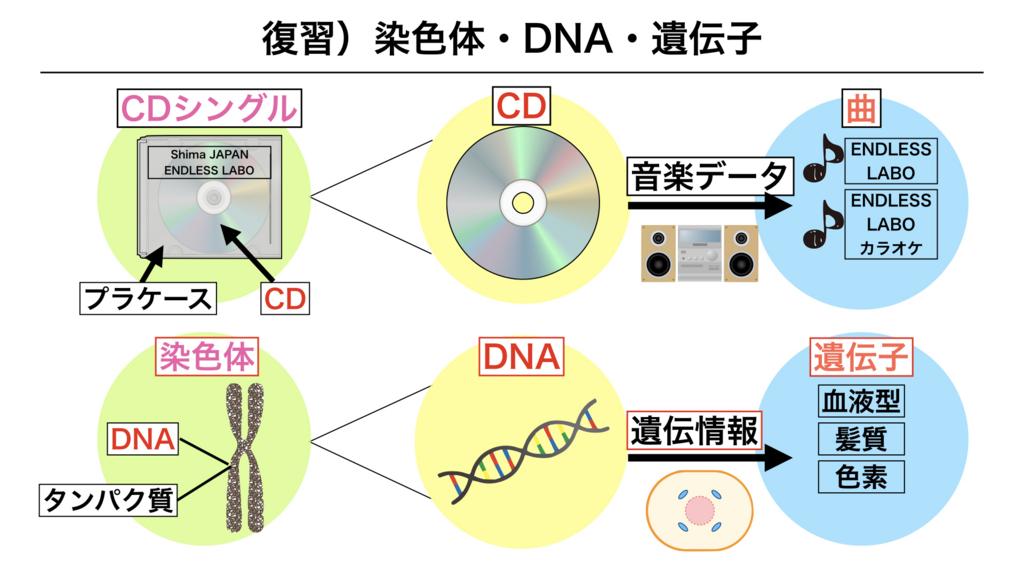 f:id:shimasensei:20180301173423j:plain