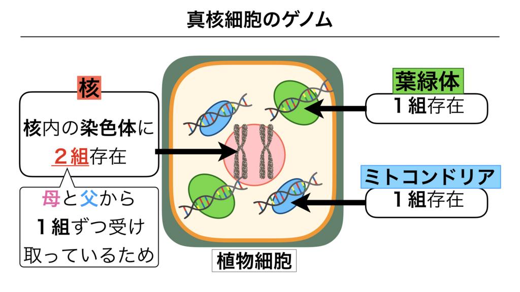 f:id:shimasensei:20180301173521j:plain
