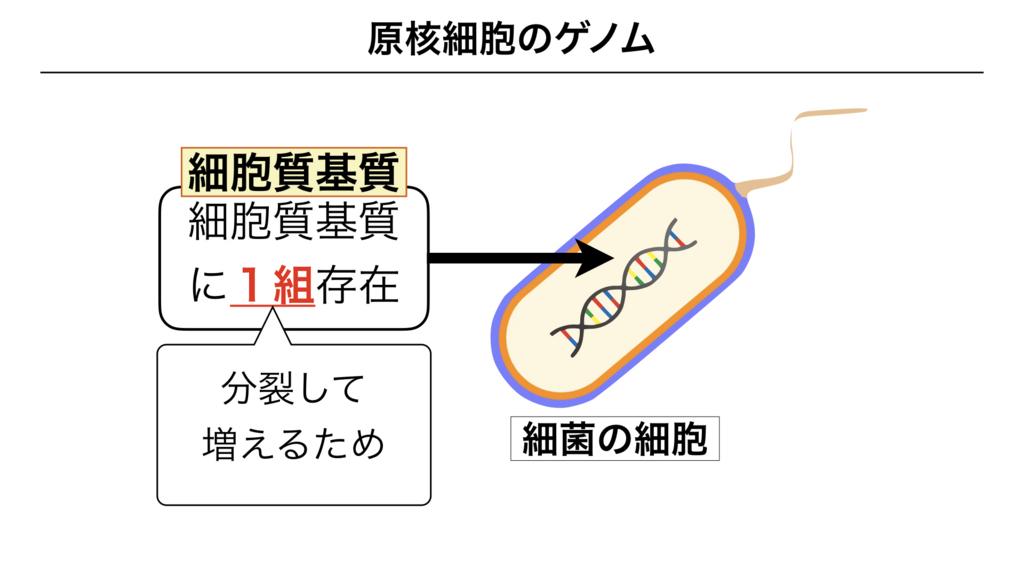 f:id:shimasensei:20180301173540j:plain