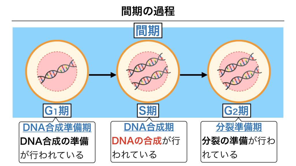 f:id:shimasensei:20180301201829j:plain
