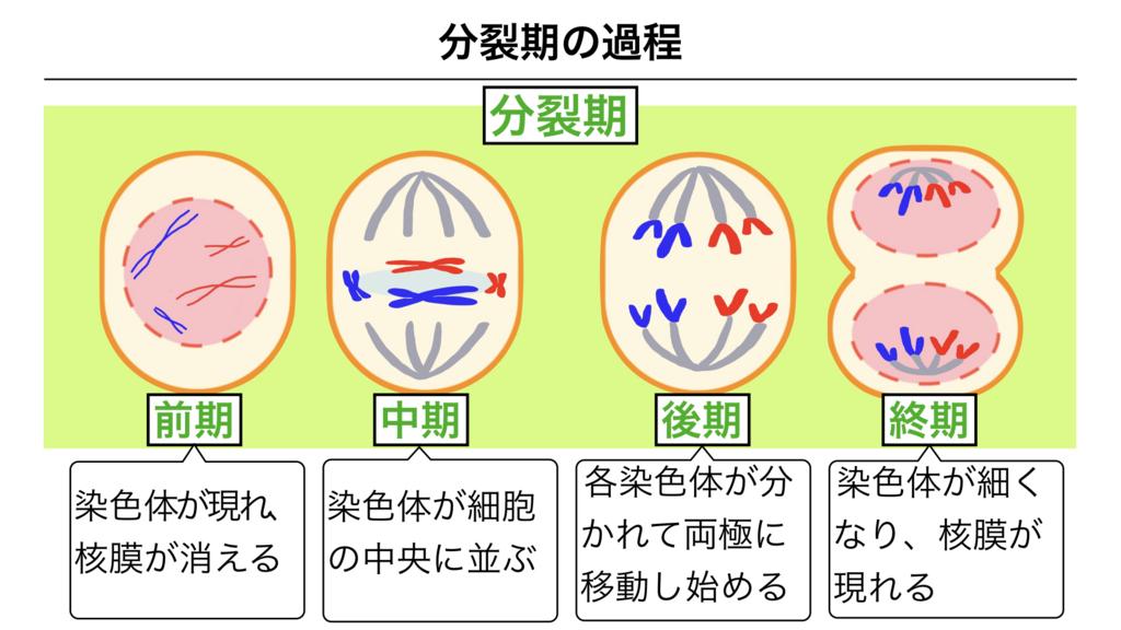f:id:shimasensei:20180301201845j:plain