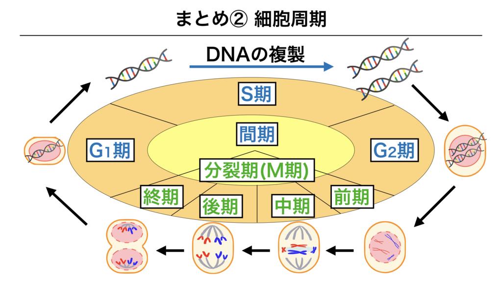 f:id:shimasensei:20180301201944j:plain