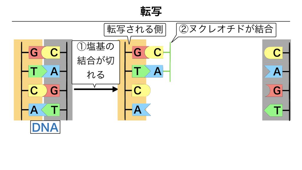 f:id:shimasensei:20180303113002j:plain