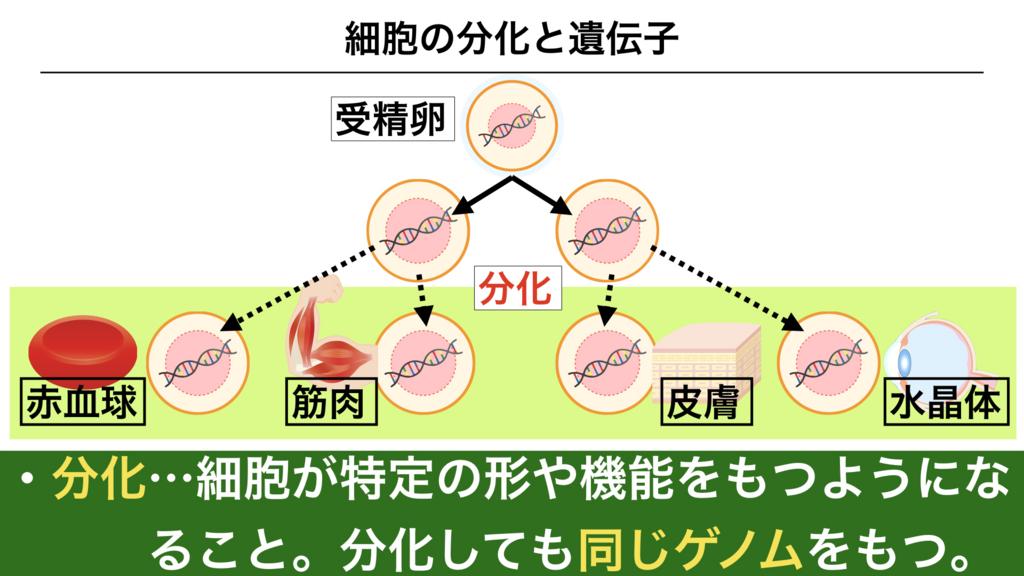 f:id:shimasensei:20180303141508j:plain