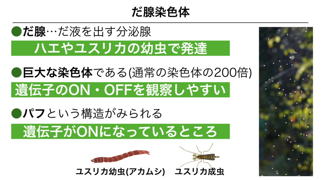 f:id:shimasensei:20180303141637j:plain