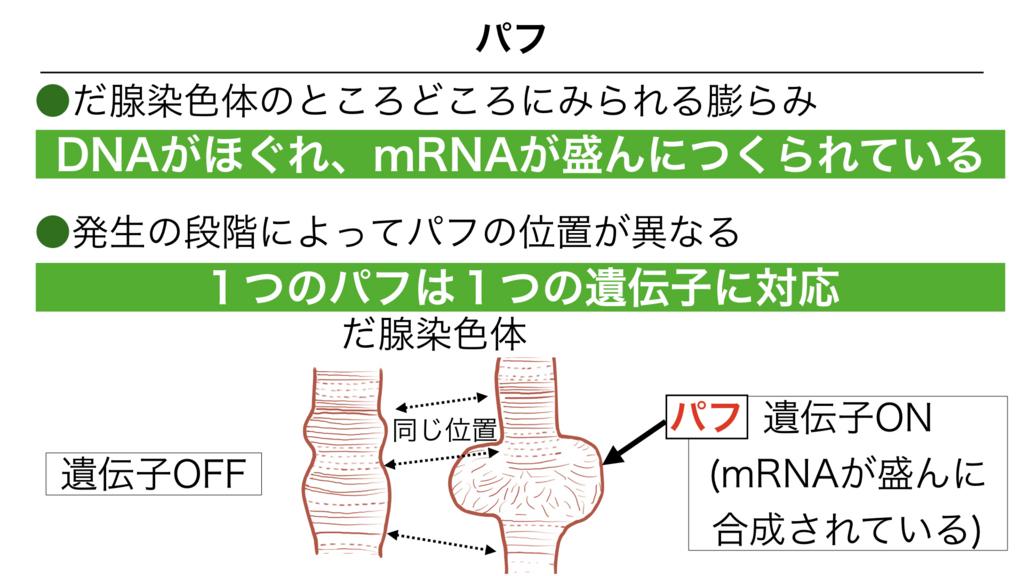 f:id:shimasensei:20180303141655j:plain