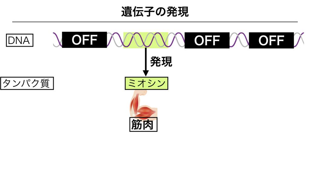 f:id:shimasensei:20180303141739j:plain