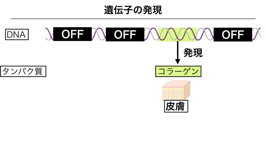 f:id:shimasensei:20180303142153j:plain