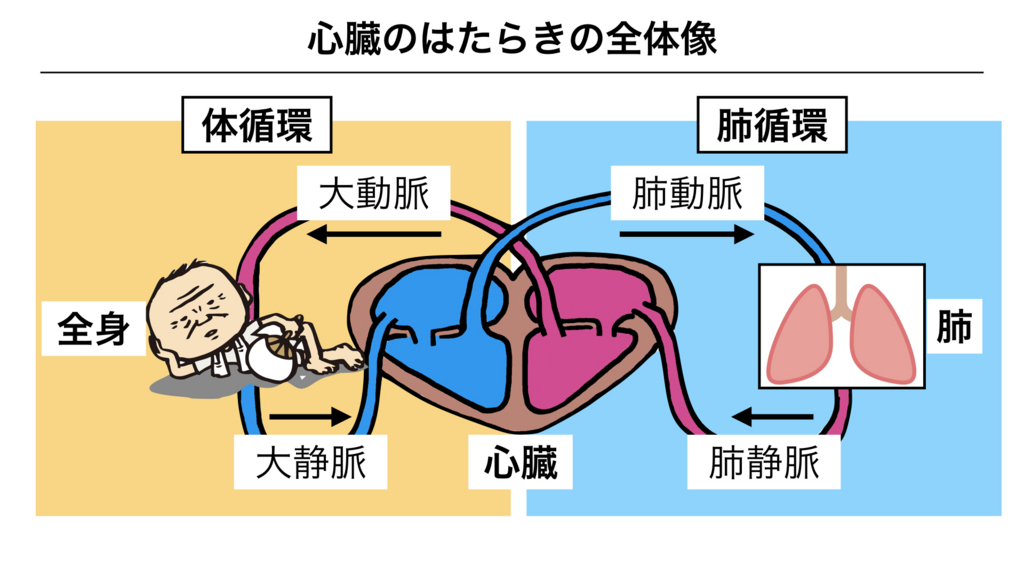 f:id:shimasensei:20180305184451j:plain